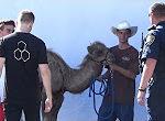 Spaß mit dem Cameltoe