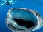Größter Fisch der Welt