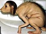 Mutationen im Tierreich