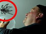 Spinnenattacke auf Papa