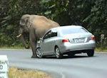 Elefant setzt sich auf Auto