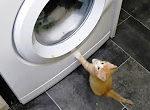 Katzen an der Waschmaschine