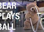 Sportlicher Bär