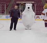 Eisbär fliegt um
