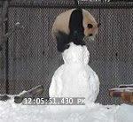 Der Panda mit dem Schneemann