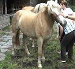 Pferd will nicht