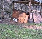 Schaf spielt mit Hund