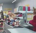 Netto Katzen